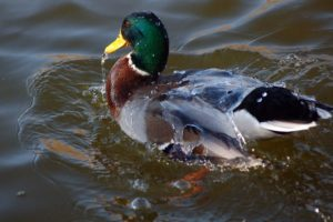 water-off-a-ducks-back